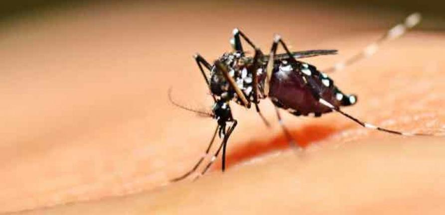 HNSC reduz preço de exames para diagnóstico de dengue. Confira os valores